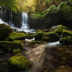 Le monde Perdus - Ce bout de terre exposé aux vents des 40 ème rugissants offre une extraordinaire diversité de paysages et de climats. Durant ce stage photo en Tasmanie vous découvrirez aussi sa faune endémique qui en fait une destination de choix pour tout amoureux de la nature.