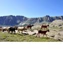 Mercantour Ecotourisme  - <p><em><strong>Fortement attachés à notre territoire, à la protection et à la valorisation de son patrimoine naturel et culturel, nous sommes engagés dans l'Association Mercantour Ecotourisme, un réseau d'hébergeurs, agriculteurs, accompagnateurs en montagne, artisans, artistes, etc...</strong></em></p> <p><em><strong>Nous sommes tous habitants des vallées du Mercantour et unis par des passions communes: la nature et la montagne.</strong></em></p> <p><em><strong>Partenaires du Parc national du Mercantour, nous sommes heureux de faire découvrir à nos visiteurs nos paysages, notre biodiversité exceptionnelle tout en vous faisant partager nos savoir-faire et les mille et une histoires qui font l'identité et la vie de nos villages.</strong></em></p> <p><em>Nos valeurs</em></p> <p>Notre objectif est toujours de faire vivre à nos visiteurs des moments privilégiés basés sur le contact humain et des services de qualité tout en favorisant détente et convivialité.</p> <p>Au travers de nos 7 engagements pour l'écotourisme, reconnus par la Charte Européenne du Tourisme Durable, nous sommes attachés à donner du sens à nos prestations pour que votre séjour soit une vraie expérience de voyage :</p> <ul> <li>Garantir aux visiteurs la découverte de paysages de qualité et du patrimoine architectural local</li> <li>Intégrer au maximum le lieu de séjour et les activités à l'environnement</li> <li>Valoriser la gestion environnementale de l'établissement</li> <li></li> </ul> <p><em></em></p>